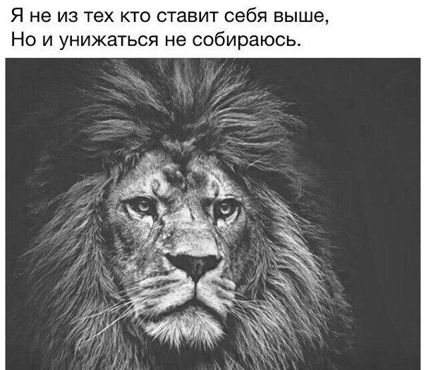 Надписи с картинками львов, открытка сердечко открытка