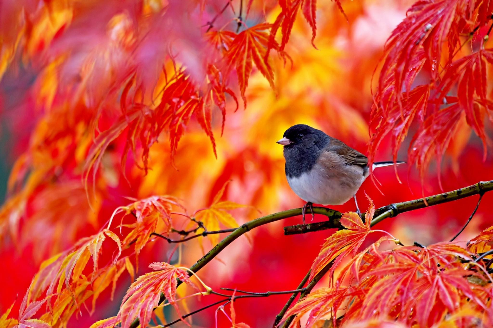 Доброе утро картинки с птичками осень